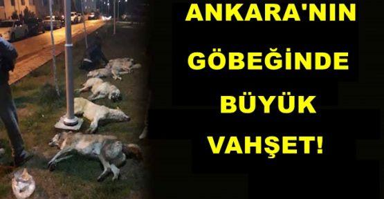 Ankara'nın Göbeğinde Büyük Vahşeti!