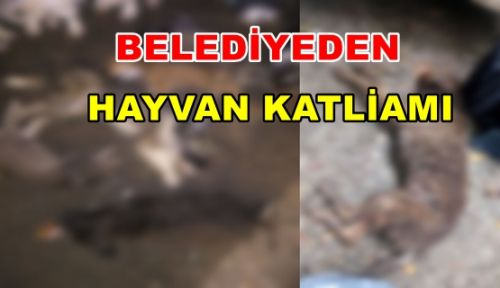 Belediye'den Hayvan Katliamı!
