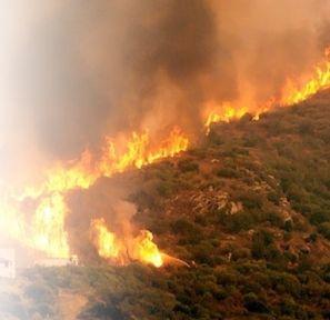 Boğaz'da orman yangını meydana geldi!