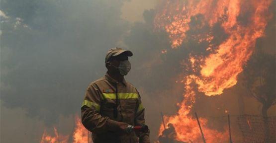 Dilovası'nda bulunan besi çiftliğinde büyük yangın!