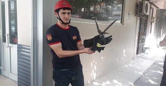 Gebze'de ebabil kuşu yakalandı