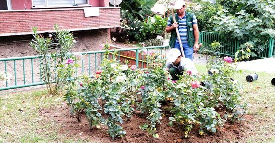 Gültepe Mahallesi gül bahçesine dönüşüyor