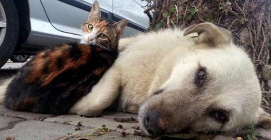 Hayvanlara Şiddet Hangi Hastalığın Belirtisi?