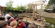 çayırova belediyesi hayvanat bahçesi...