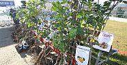 Çiftçilere meyve fidanı desteği