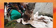 Yağmur kanalına sıkışan kediyi itfaiye...