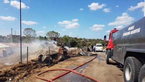 Yangınında  büyükbaş hayvanlar telef olmadan kurtarıldı