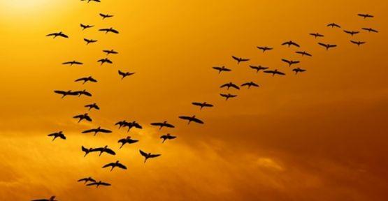 Kuşların Uçuş Kabiliyetleri